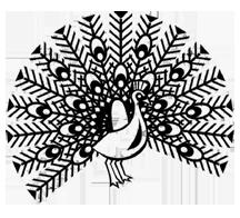peacock pen drawing